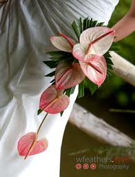 Pink Anthuriums styled in a cascade bouquet.