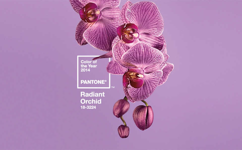 Pantone Colour of 2014 - Radiant Orchid