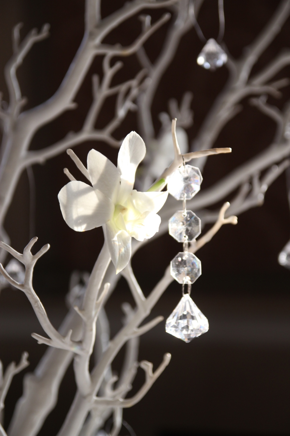 White orchids and crystal drops on white branches