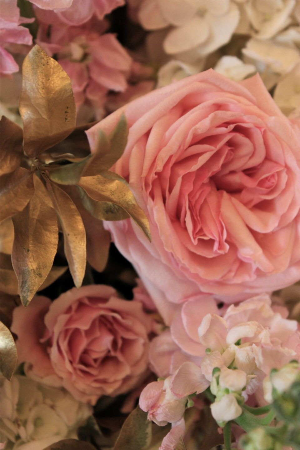 Pink Garden Rose and Gold Leaf Detail